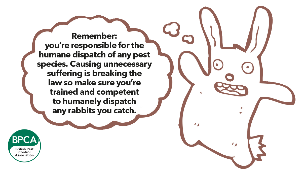 using unnecessary suffering is breaking the law so make sure you're trained and competent to humanely dispatch any rabbits you catch