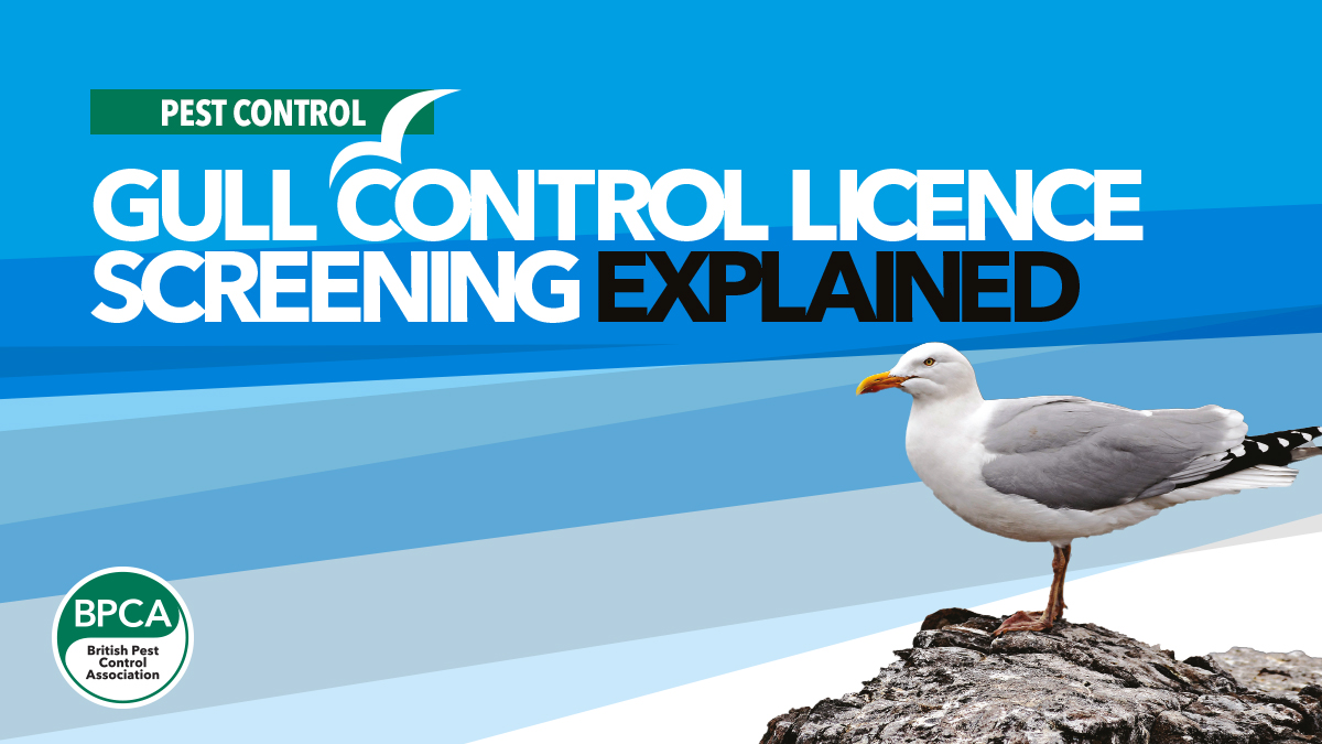 gull-control-screening